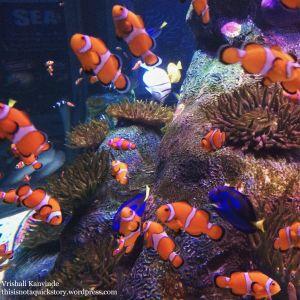 """""""So many Nemos!!"""""""